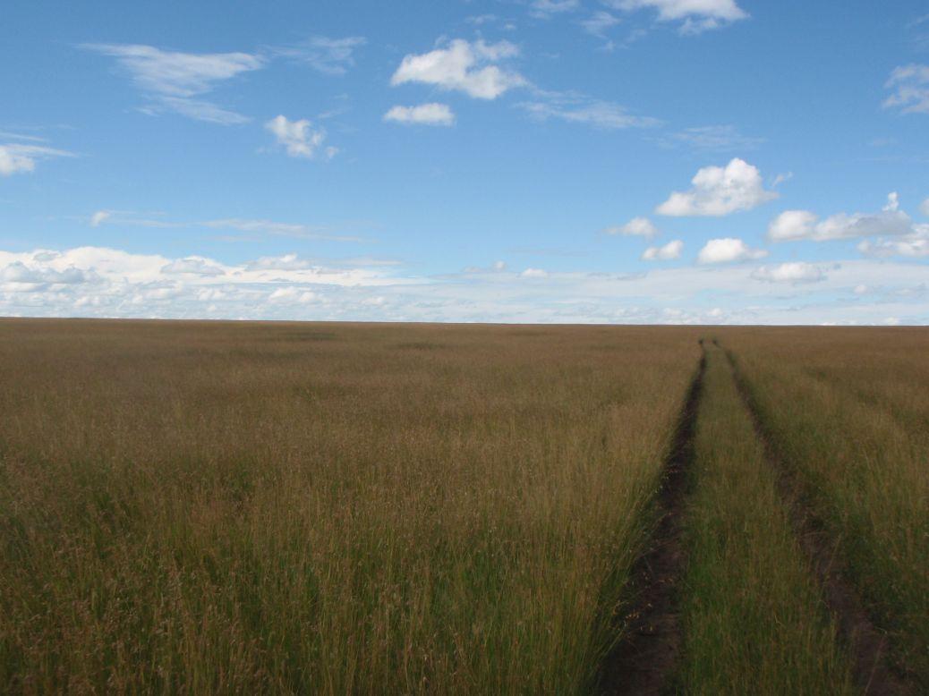Driving in Masai Mara